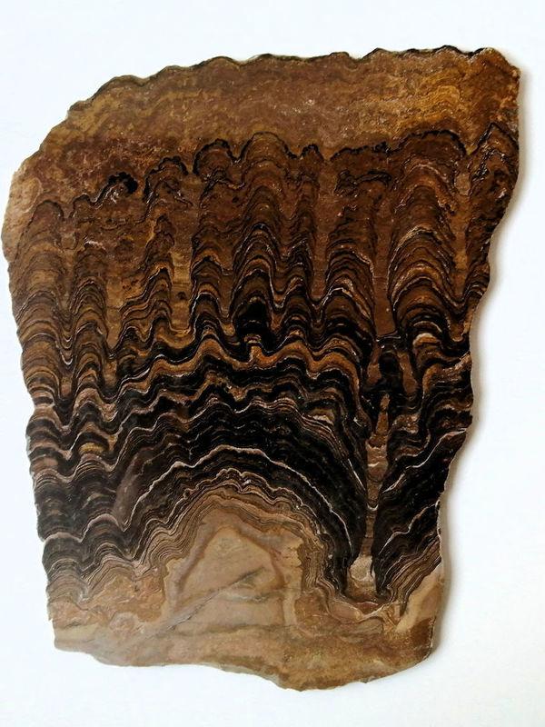 Stromatoliet plaat