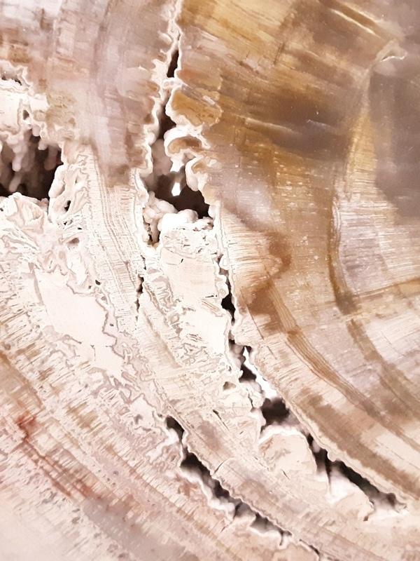 Versteend hout 01