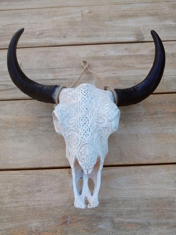 Buffel schedel 02